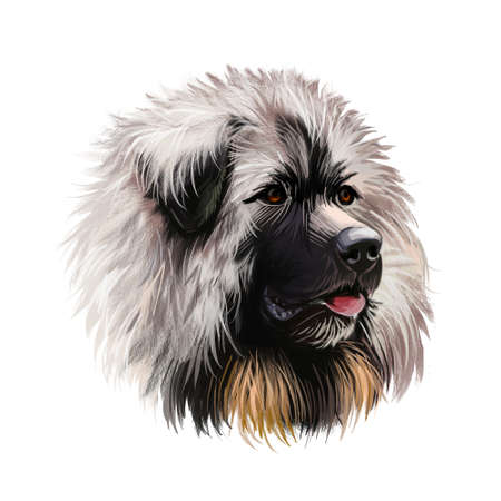 Sarplaninac dog portrait isolated on white. Digital art illustration of hand drawn web, t-shirt print and puppy food cover design. Yugoslavian Shepherd Dog, molosser-type mountain dog. Charplaninatz