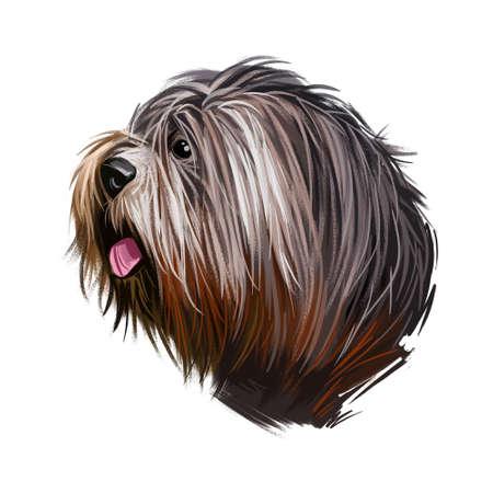 Schapendoes dog portrait isolated on white. Digital art illustration of hand drawn dog for web, t-shirt print and puppy food cover design. Dutch Sheepdog, Nederlandse Schapendoes dog breed Stock Illustration - 130996617