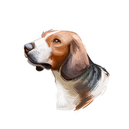 Siberian Tricolor Hound from Siberia dog breed digital art. Purebred domestic animal watercolor portrait close up, puppy looking in distance, canine isolated, mammal with smooth fur, furry pet. Imagens