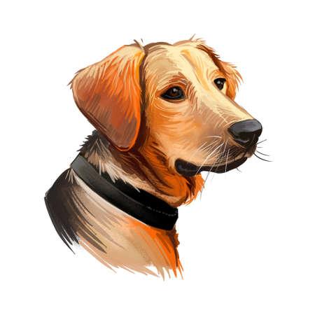 Schillerstovare dog portrait isolated on white. Digital art illustration of hand drawn web, t-shirt print and puppy cover design. Schiller Hound Bracke, breed scenthound type, hunting dog in Sweden