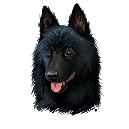 Schipperke dog portrait isolated on white. Digital art illustration of hand drawn web, t-shirt print and puppy food cover design. Spitzke, Spits or Spitske Belgian breed of spitz miniature sheepdog