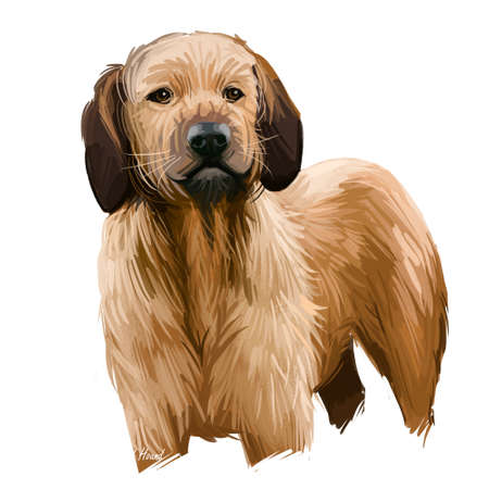 Styrian Coarse-haired Hound breed of medium-sized hound dog. Digital art illustration. Animal watercolor portrait closeup isolated muzzle of pet, canine hand drawn clipart, animalistic drawing, doggy