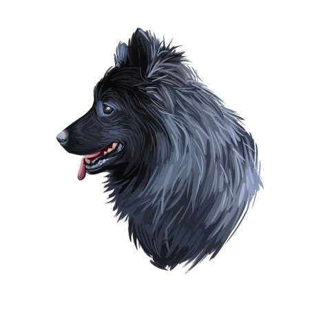 Swedish Lapphund breed of dog of Spitz type from Sweden, Lapphund. Digital art illustration. Animal watercolor portrait closeup isolated muzzle of pet, canine hand drawn clipart, animalistic drawing Фото со стока