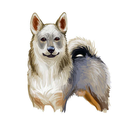 Swedish Vallhund cow dog, breed of dog native to Sweden. Digital art illustration. Animal watercolor portrait closeup isolated muzzle of pet, canine hand drawn clipart, animalistic drawing, doggy Stockfoto