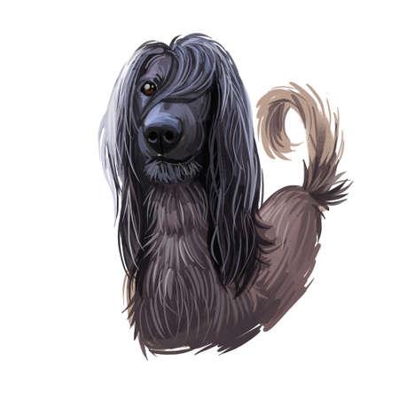 Taigan Kyrgyzdyn Taighany Kyrgyzskaya Borzaya Taigan in Russian sighthound breed. Digital art. Animal watercolor portrait closeup isolated muzzle of pet, canine hand drawn clipart, animalistic drawing