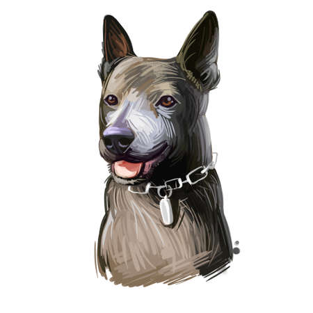 Taiwan Dog breed, Formosan Mountain Dog, Taiwanese Canis Native Takasago puppy. Digital art. Animal watercolor portrait closeup isolated muzzle of pet, canine hand drawn clipart, animalistic