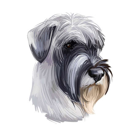 Standard Schnauzer Mittelschnauze dog breed isolated on white. Digital art. Animal watercolor portrait closeup isolated muzzle of pet, canine hand drawn clipart, animalistic drawing 写真素材