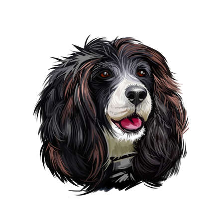 Russian Spaniel dog portrait isolated on white. Digital art illustration for web, t-shirt print and puppy food cover design. Rosyjski Spaniel, cross breeding English Cocker and Springer Spaniels Stockfoto