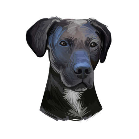 Stephens Cur scent hound ur dog breed isolated on white. Digital art illustration. Animal watercolor portrait closeup isolated muzzle of pet, canine hand drawn clipart, animalistic drawing, doggy Banque d'images - 130996774