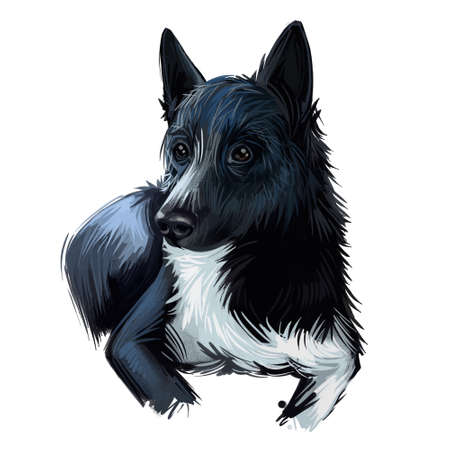 Russo-European Laika dog portrait isolated on white. Digital art illustration of hand drawn dog for web, t-shirt print and puppy food cover design. Russko-Evropeikaya Laika, dark with white patches