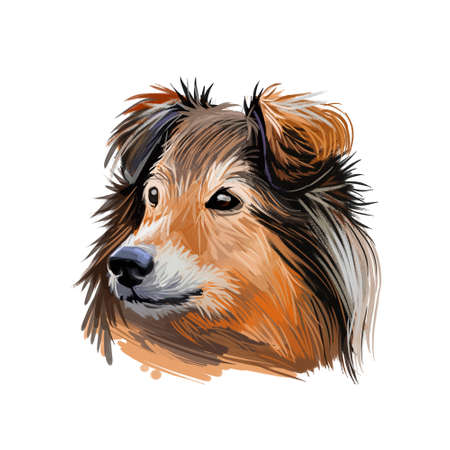 Shetland sheepdog purebred domesticated animal digital art. Canine watercolor portrait closeup, mammal with long fur, long-haired pet looking in distance. Hand drawn guard doggy protecting hound.