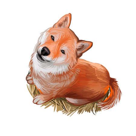 Shiba Inu Brushwood turf Japanese dog purebred digital art. Watercolor portrait of domesticad animal, mammal with smooth coat from Japan, Asian breed of canine. Hand drawn doggish body closeup.