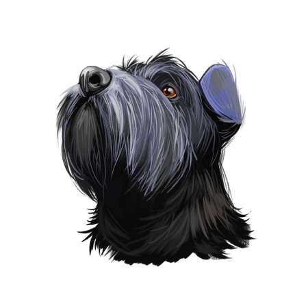 Standard Schnauzer Mittelschnauzer purebred domestic animal from Germany digital art. German doggy with long haired coat, watercolor portrait closeup of canine pedigree breed, furry mammal muzzle