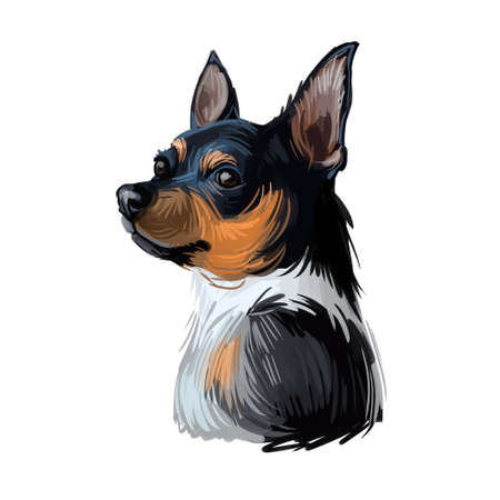 Teddy Roosevelt Terrier American hunting breed. Feist Bull-terrier, Smooth Fox Manchester Whippet, Italian Greyhound, Turnspit Dog, and Wry-legged. Digital art illustration. Animal watercolor portrait