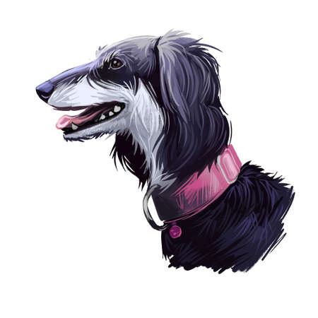 Saluki dog portrait isolated on white. Digital art illustration of hand drawn dog for web, t-shirt print and puppy food cover design. Standardised breed developed from sighthounds dogs hunt, by sight