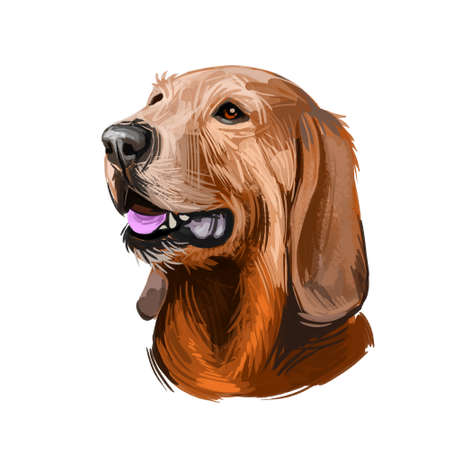Segugio Italiano Italian breed of dog digital art. Isolated watercolor pet portrait of purebred domesticated animal originated from Italy. Canine with long ears sticking out tongue clip art.