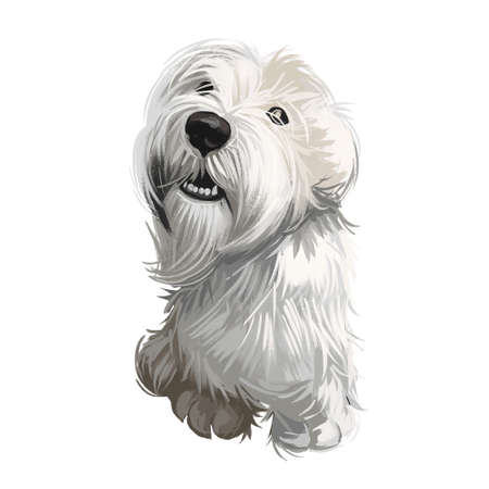 Sealyham Terrier toy god, pet of small size watercolor portrait digital art. Hand drawn domestic animal with long haired coat canine purebred with opened mouth, toy breed small sized muzzle.