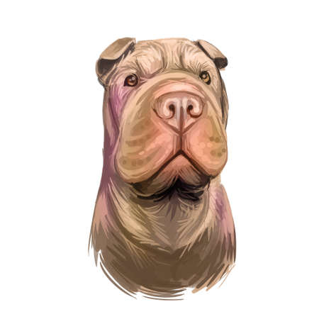 Shar Pei purebred type of dog originated from China digital art. Isolated watercolor portrait of pet close up, animal profile and text, hound breed with smooth coat fur doggish snout muzzle. Imagens