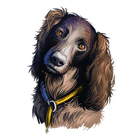 Saint-Usuge Spaniel dog portrait isolated on white. Digital art illustration of hand drawn dog for web, t-shirt print and puppy food cover design. Epagneul de Saint-Usuge, St-Usuge Spaniel Фото со стока