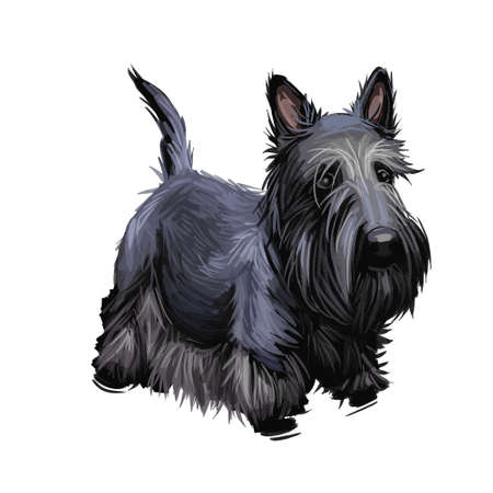 Scottish Terrier domestic animal originated from Britain Scolnad doggy digital art illustration . Doggy hand drawn clip art watercolor portrait. British purebred with long coat fur, furry canine hound