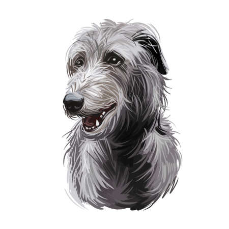 Scottish Deerhound pet originated from Scotland digital art illustration . Canine with long haired coat from Britain purebred watercolor portrait, pet clip art hand drawn domestic animal doggy.
