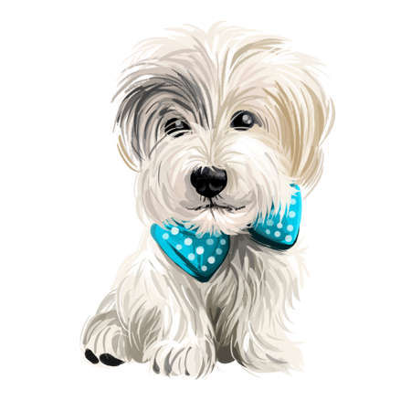 Sporting Lucas Terrier breed of dog of terrier type isolated on white. Digital art. Animal watercolor portrait closeup isolated muzzle of pet, canine hand drawn clipart, animalistic drawing