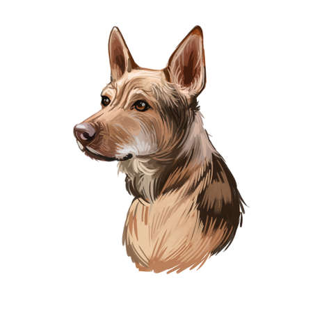Telomian breed of dog native to Malaysia. Anjing Kampung. Digital art illustration. Animal watercolor portrait closeup isolated muzzle of pet, canine hand drawn clipart, animalistic drawing