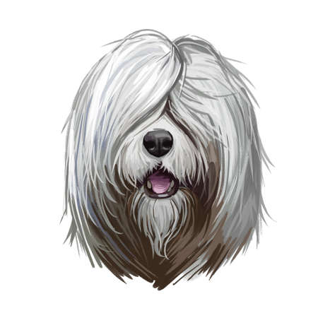 South Russian Ovcharka breed with opened mouth digital art. Watercolor portrait of pet originated from Russia, domestic animal with long fur, furry muzzle of canine. Hand drawn purebred mammal.
