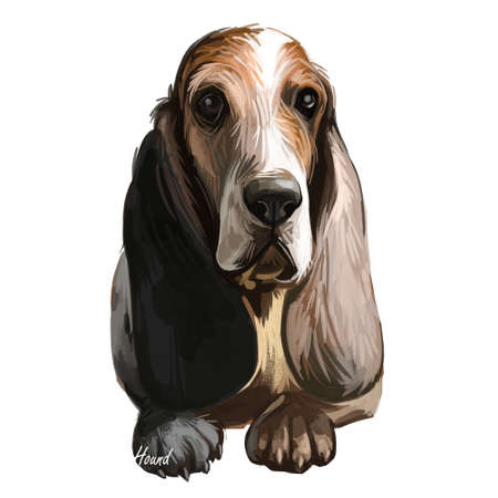 Southern Hound with haired coat, purebred animal digital art. Animalistic watercolor portrait closeup of muzzle of canine with long ears. Hand drawn mammal doggish face isolated breed doggy body Imagens