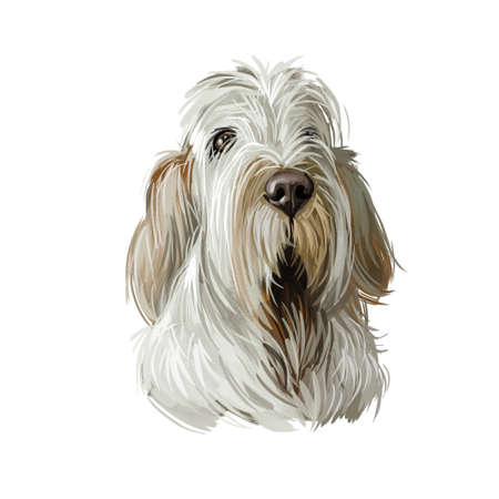 Spinone Italiano purebred dog with long haired coat digital art. Domestic animal with furry face watercolor pet portrait closeup, animalistic drawing. Hound canine from Italy, Italian mammal with fur.