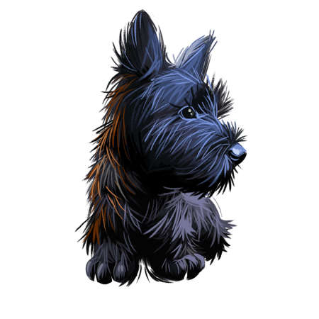 Skye Terrier lap dog tiny pet of small size digital art. Puppy looking in distance breeding domestic animal closeup watercolor portrait, isolated muzzle of purebred. Hand drawn doggy with fur. Stock Photo