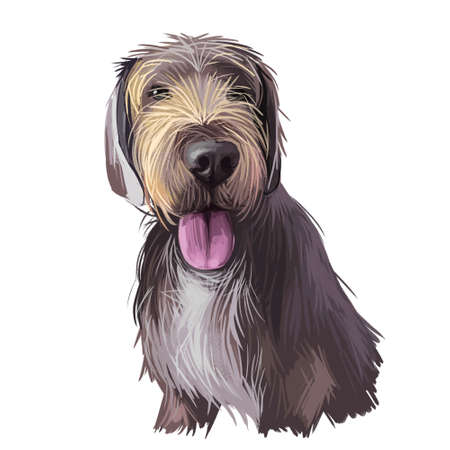 Slovak rough haired pointer sticking out tongue digital art. Pet hand drawn watercolor portrait closeup, doggish muzzle with fur, furry animal. Hound clipart, canine mammal with long haired coat Imagens