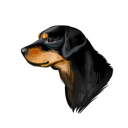 Smalandsstovare Smaland dog Swedish breed of dog digital art. Watercolor portrait of pet muzzle closeup, pet looking in distance, Scandinavian hound animal with smooth haired coat doggy clipart. Imagens