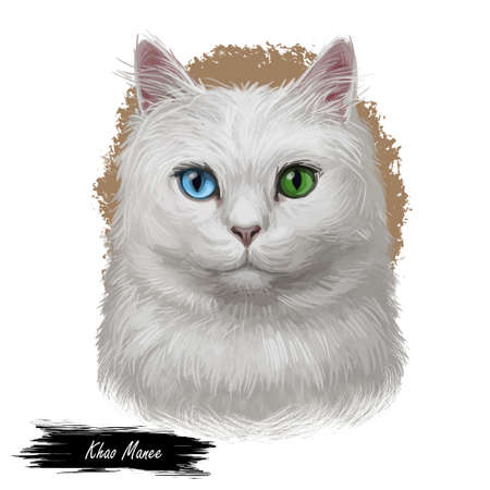 Khao Manee uncommon breed in sitting pose. Kitty domestic animal isolated on white background. Digital art illustration of hand drawn cat for web. Small kitten with shorthair coat and blue eyes Фото со стока