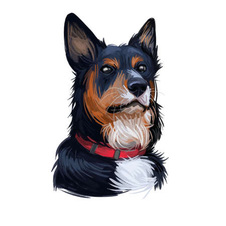 Welsh Sheepdog herding breed dog portrait isolated on white. Digital art illustration, animal watercolor drawing of hand drawn doggy for website. Pet has tricolour coat, it black, white and red.