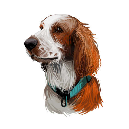 Welsh Springer or Cocker Spaniel dog breed portrait isolated on white. Digital art illustration, animal watercolor drawing of hand drawn doggy for web. Stock Photo