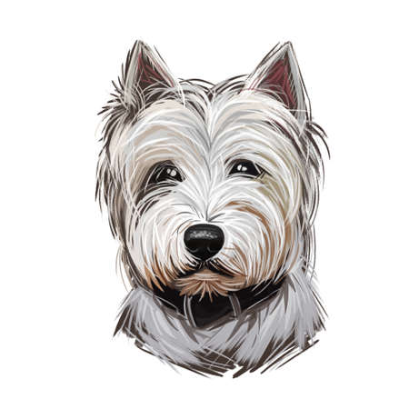 West Highland White Terrier or Westie dog breed portrait isolated on white. Digital art illustration, watercolor drawing of hand drawn doggy. Pet has soft and dense undercoat and rough outer coat.