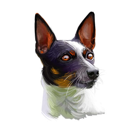Tenterfield Terrier dog portrait isolated on white. Digital art illustration, animal watercolor drawing of hand drawn doggy for web. Petwith smooth short coat that colored in white with black.