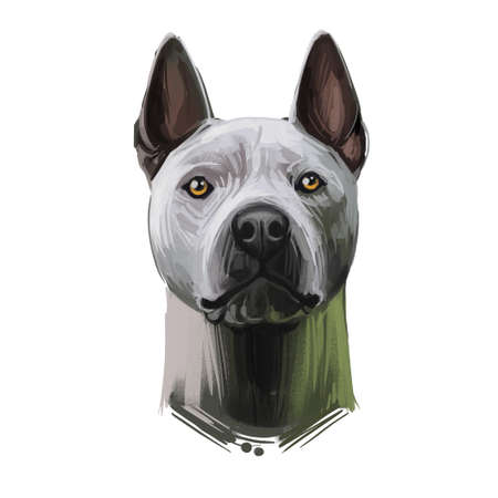 Blue Thai Ridgeback dog portrait isolated on white. Digital art illustration, animal watercolor drawing of hand drawn doggy for web. Muscular pet with strong face and very short and smooth coat.