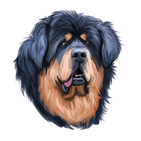 Tibetan Mastiff giant size dog breed portrait isolated on white. Digital art illustration, animal watercolor drawing of hand drawn doggy for web. Black and tan pet with short medium coat length.