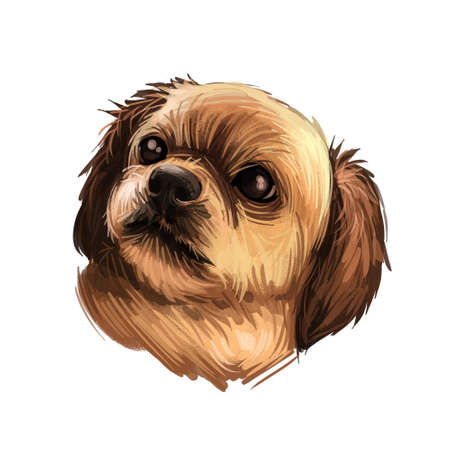 Tibetan Spaniel dog breed portrait isolated on white. Digital art illustration, animal watercolor drawing of hand drawn doggy for web. Pic of assertive and small pet with gold colored coat, dark nose