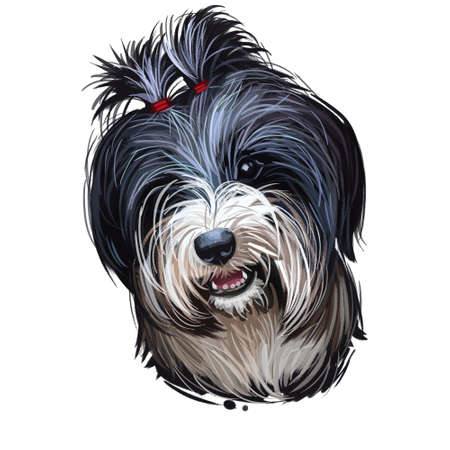 Tibetan Terrier, Tsang or Dokhi Apso dog breed portrait isolated on white. Digital art illustration, animal watercolor drawing of hand drawn doggy for web. Pet has double coat that black colored. Stock fotó