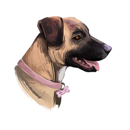 Treeing Tennessee Brindle dog breed portrait isolated on white. Digital art illustration, animal watercolor drawing of hand drawn doggy. Pet with short and soft coat that light brown with black. 版權商用圖片