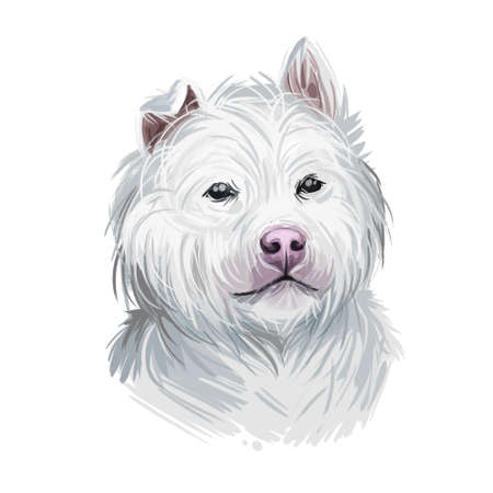 Xiasi dog breed portrait isolated on white. Digital art illustration, animal watercolor drawing of hand drawn doggy for web. Pet has lean muscular body, short and wiry white coat with hunting instinct
