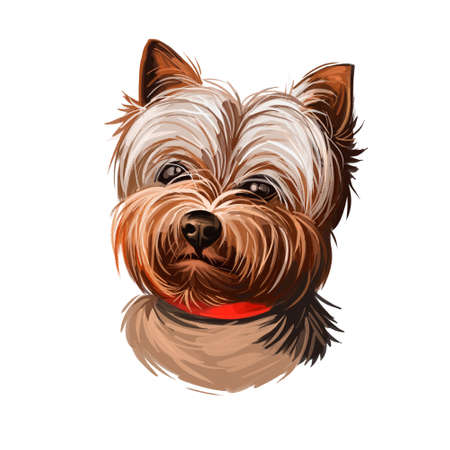 Yorkshire Terrier dog breed portrait isolated on white. Digital art illustration, animal watercolor drawing of hand drawn doggy for web. Small domestic pet with grey, black and tan colors of coat Stock fotó