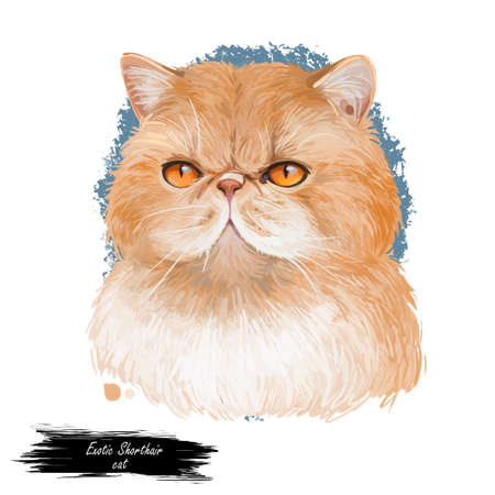 Exotic shorthair kitten isolated on white background. Digital art illustration of hand drawn kitty. Sitting short haired animal with silky coat and deep eyes. Lying pet with sable fur watercolor Stock Photo
