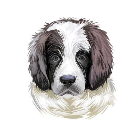Landseer puppy muzzle watercolor portrait closeup digital art. Newfoundland dog from Canada, pedigree breed of large sizes, giant domesticated animal mammal with furry muzzle, canis lupus pet Imagens