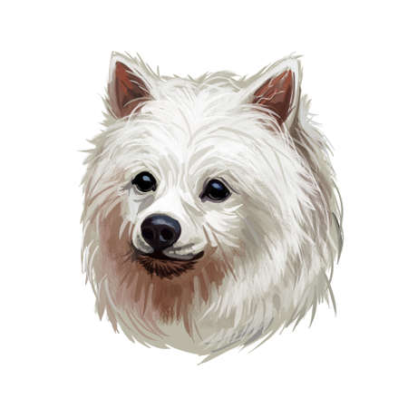 Volpino Italiano dog spitz type breed portrait isolated on white. Digital art illustration, animal watercolor drawing of hand drawn doggy for web. Small pet with long haired coat that has white color. Stok Fotoğraf