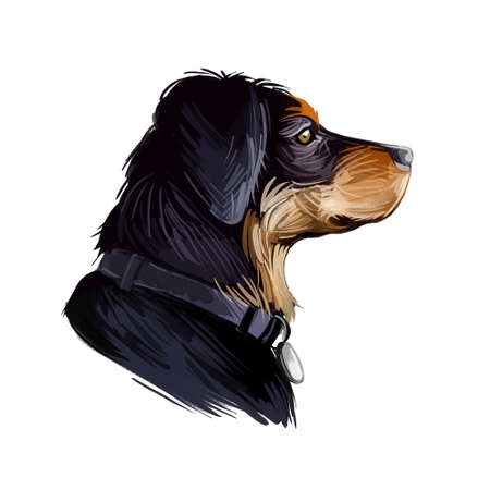 Transylvanian or Hungarian Hound dog breed portrait isolated on white. Digital art illustration, animal watercolor drawing of hand drawn doggy for web. Pet coat has black color marked with tan on face