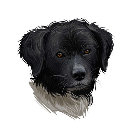 Wetterhoun or Frisian Water dog breed portrait isolated on white. Digital art illustration, animal watercolor drawing of hand drawn doggy for web. Pet thick and curly coat has black with white colour